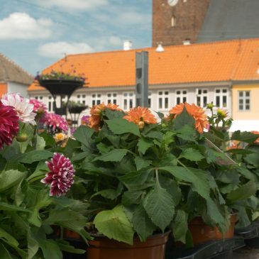 Plantemarked på Axeltorv