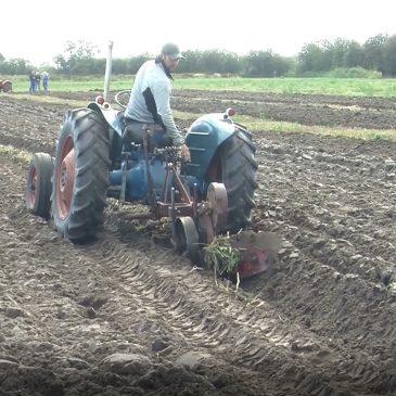Veteran traktor Pløjning