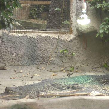 Madpakketur og krokodillezoo