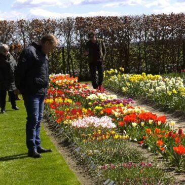 Ivers tulipaner