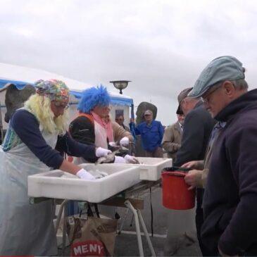 Sildekoner på havnen